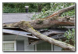 Arizona Home Insurance Covers Tree on house